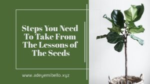The Seeds: 6 Actionable Steps