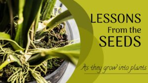 Even seeds of plants have lessons everyone should learn to live a great life